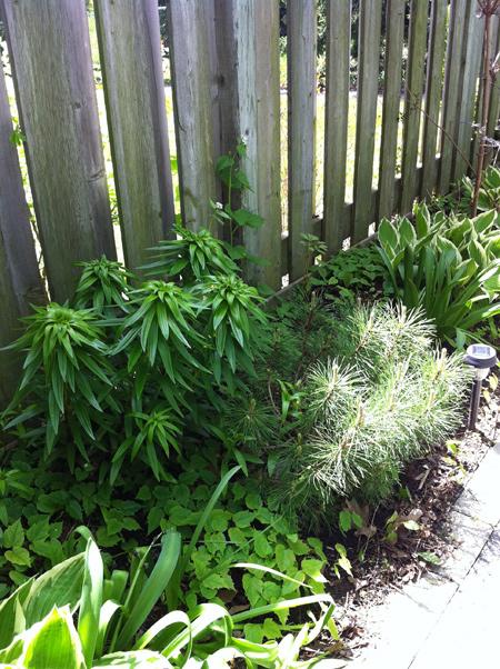 Grown-in-Garden