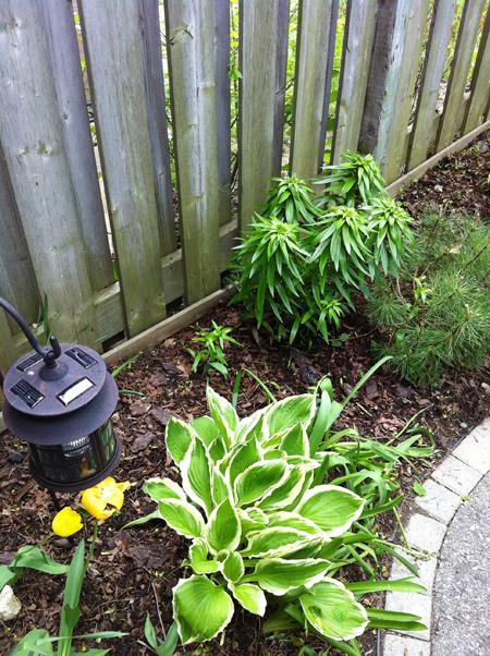 Weeded-Garden