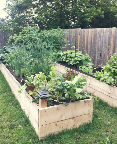 Project Grow Our Own Food: My Experience • Brittany Stager