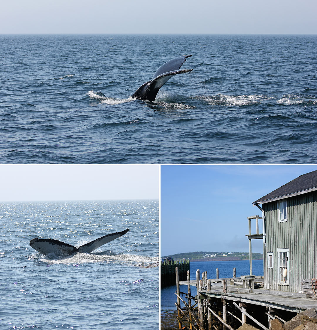 Fundy Bay Whale Watching Nova Scotia