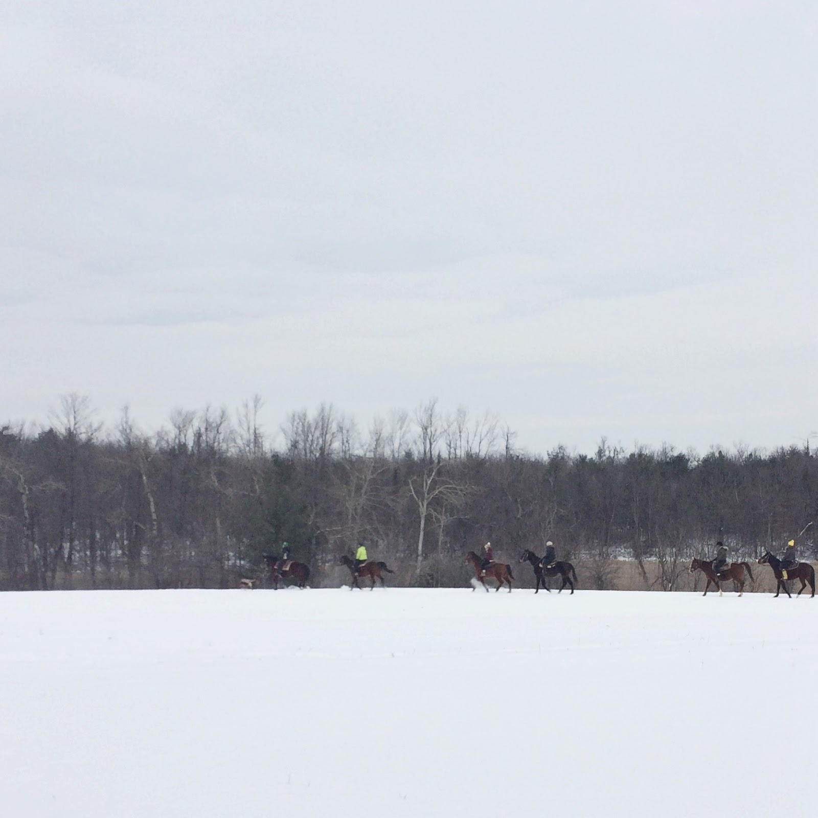 Riding-Horses-Field-In-Winter