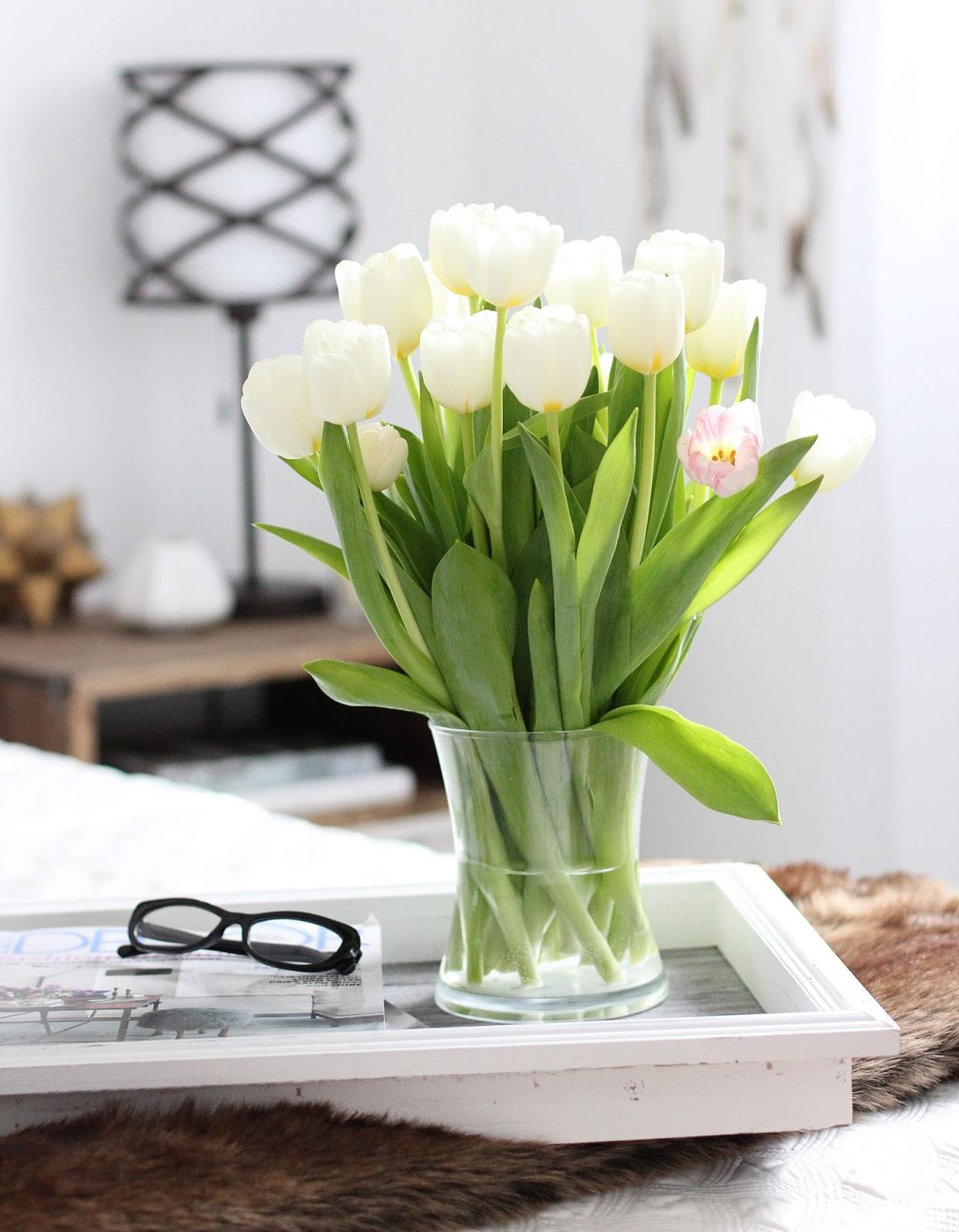 Tulips-Spring-Arrived
