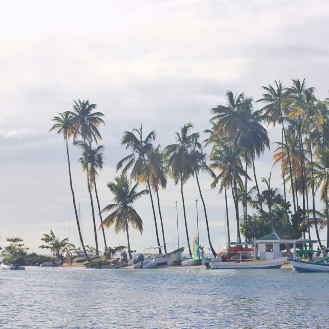 St-Lucia-Shoreline-Palm-Trees